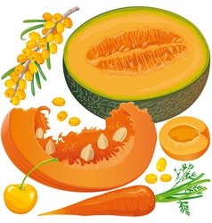 Carotene products set vector image