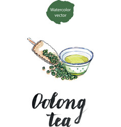 dry chinese oolong tea leaf and oolong tea in vector image vector image