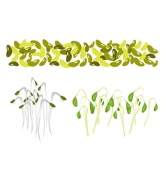 Set of Mung Beans and Sprouts on White Background vector image vector image