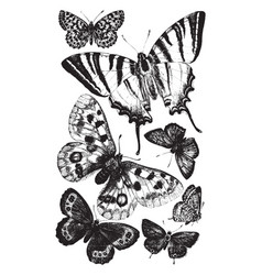 British butterflies vintage vector