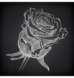 black and white digital drawing sketch rose on vector image