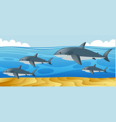 ocean scene with sharks swimming in the sea vector image