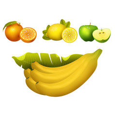 ripe fruits realistic juicy healthy vector image