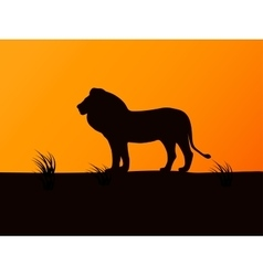 Silhouette lion on the background of sunset vector