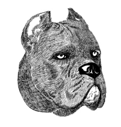 Cane Corso dog portrait creative vector image