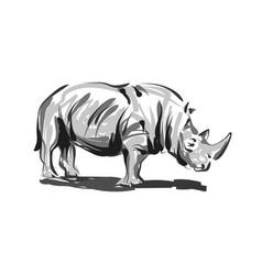 Line sketch rhino vector