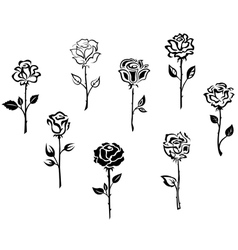Rose flowers set isolated on white background vector image