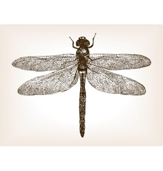 Dragonfly insect hand drawn sketch vector image