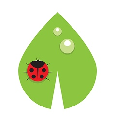 Flat leaf with drops of dew and ladybird vector image vector image