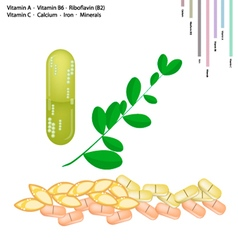 Fresh moringa leaves with vitamin a b6 b2 and c vector