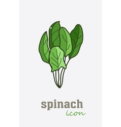 Spinach icon vegetable green leaves vector