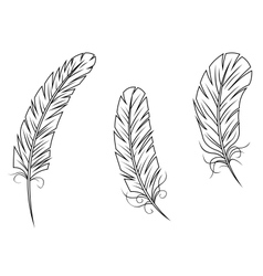 Feathers and quills vector image vector image