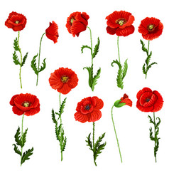 Isolated icons of poppy flowers vector