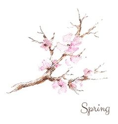 Watercolor branch of cherry blossoms vector
