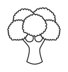 Broccoli vegetable isolated icon vector