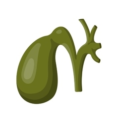 Stomach icon vector image