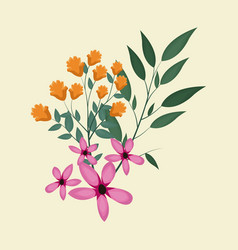 cosmos natural floral decoration vector image
