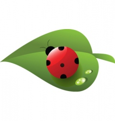 Ladybird on leaf vector