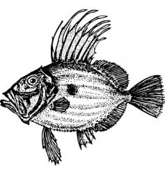 fish zeiformes vector image vector image