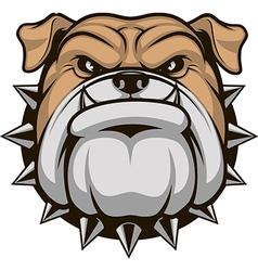 Head ferocious bulldog vector