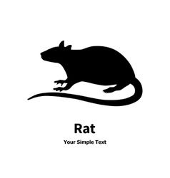 Black rat vector