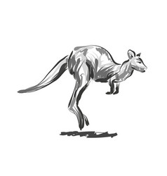 Line sketch leaping kangaroo vector