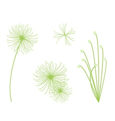 Set of Cyperus Papyrus Plant on White Background vector image