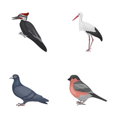 Woodpecker stork and others birds set collection vector