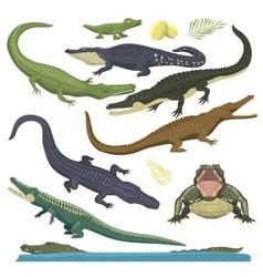 Green crocodile reptile vector