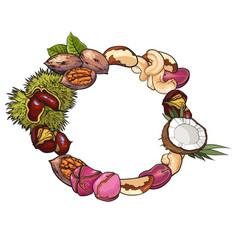 round frame of walnut coconut cashew kola pine vector image