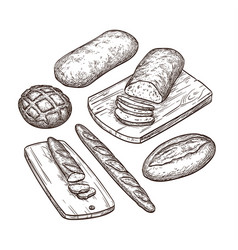 hand drawn bread set vector image