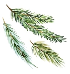 Fir-tree branch vector