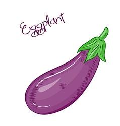 isolated cartoon fresh hand drawn eggplant vector image
