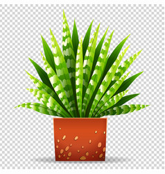Plant in pot on transparent background vector