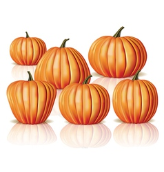 Big and small pumpkins vector image vector image
