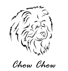 Chow Chow vector image
