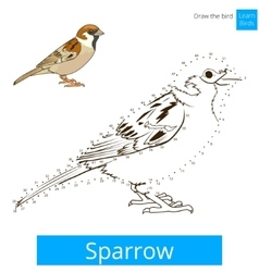 Sparrow bird learn to draw vector