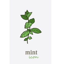 Mint icon vegetable green leaves vector