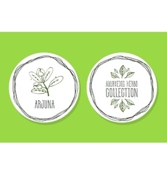 Ayurvedic herb - product label with arjuna vector