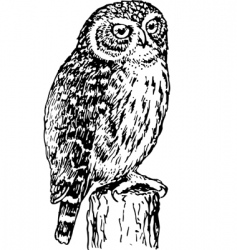 horned owl vector image