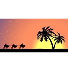 Man with camels at sunset vector image vector image