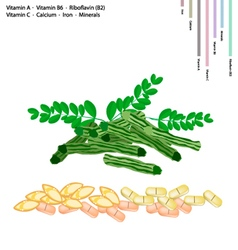 Moringa pods with vitamin a b6 b2 and c vector