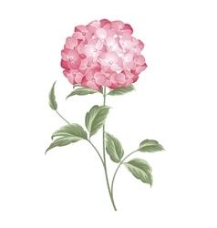 Single hortensia flower vector