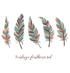 Vintage feathers set Five elegant feathers of vector image