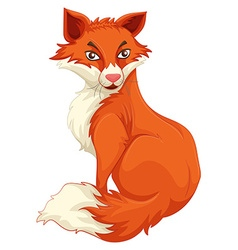 Red fox sitting alone vector