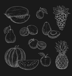 Chalk sketch icons of exotic fruits vector