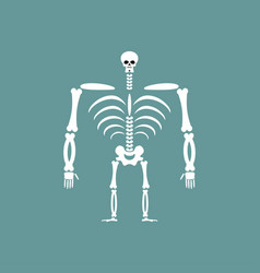 Human skeleton isolated skull and bones spine and vector