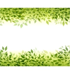 Green branches and leaves vector image