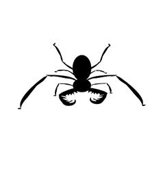 Whipless scorpion vector