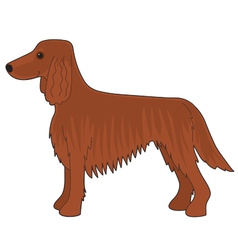Irish setter dog vector